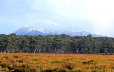 Tasmania scraps plans for wilderness logging