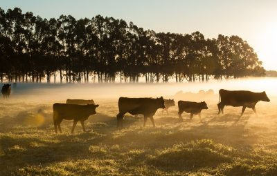 Brexit's impact on Australian agriculture